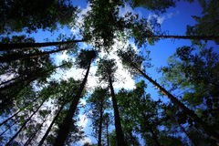 Εξετάστε επάνω τις κορυφές των δέντρων Στοκ Εικόνες