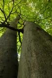 Ανατρέξτε στο δάσος Στοκ φωτογραφία με δικαίωμα ελεύθερης χρήσης