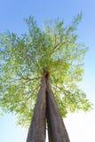 ανατρέχοντας δέντρο Στοκ φωτογραφία με δικαίωμα ελεύθερης χρήσης