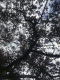 Ανατρέχοντας, κάτω από το δέντρο Στοκ εικόνες με δικαίωμα ελεύθερης χρήσης