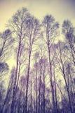 Ανατρέχοντας μέσω των δέντρων, αναδρομικό φιλτραρισμένο υπόβαθρο Στοκ φωτογραφίες με δικαίωμα ελεύθερης χρήσης