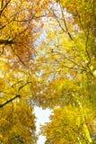 Ανατρέχοντας μέσω των δέντρων φθινοπώρου, υπόβαθρο φύσης Στοκ φωτογραφίες με δικαίωμα ελεύθερης χρήσης