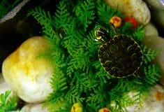 ανατρέχοντας χελώνα στοκ εικόνα