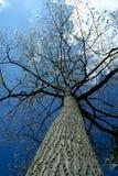 ανατρέχοντας ψηλό δέντρο Στοκ εικόνες με δικαίωμα ελεύθερης χρήσης