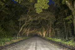 Ανατριχιαστική απόκοσμη δρύινη σήραγγα δέντρων στο νησί Edisto, νότια Καρολίνα Στοκ Φωτογραφία