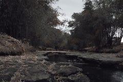 Ανατριχιαστικός ποταμός στην ημέρα Στοκ Εικόνα