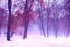 Ανατριχιαστικό και ομιχλώδες χειμερινό τοπίο στο χιονώδες πάρκο, με την εγκαταλειμμένη πορεία Ευμετάβλητη, θλιβερή, θαμπή, ρομαντ στοκ φωτογραφίες με δικαίωμα ελεύθερης χρήσης