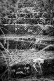 Ανατριχιαστικό να καταλήξει σκαλοπατιών πετρών Στοκ φωτογραφίες με δικαίωμα ελεύθερης χρήσης