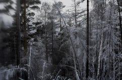 Ανατριχιαστικό, σκοτεινό δάσος Στοκ Εικόνες