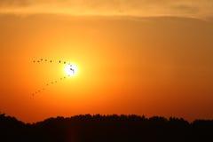 αναχώρηση πουλιών Στοκ Εικόνα