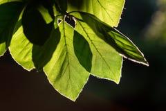 Αναδρομικά φωτισμένα λεπτομερή φύλλα με τα μέρη της λεπτομέρειας Στοκ Φωτογραφίες