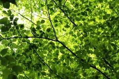 Αναδρομικά φωτισμένα πράσινα φύλλα των δέντρων Στοκ φωτογραφίες με δικαίωμα ελεύθερης χρήσης