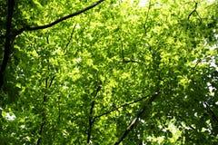 Αναδρομικά φωτισμένα πράσινα φύλλα των δέντρων Στοκ Εικόνες