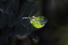 αναδρομικά φωτισμένα πράσινα φύλλα Στοκ Εικόνες
