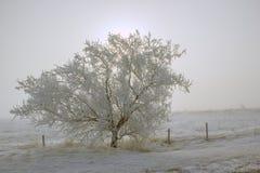 Αναδρομικά φωτισμένο δέντρο Στοκ φωτογραφία με δικαίωμα ελεύθερης χρήσης