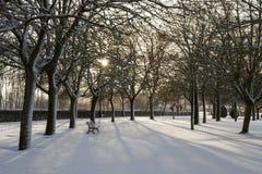 Αναδρομικά φωτισμένο πάρκο χιονώδες του ήλιου στοκ εικόνες