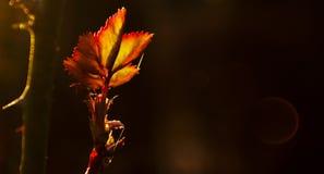 αναδρομικά φωτισμένο φύλλο Στοκ φωτογραφία με δικαίωμα ελεύθερης χρήσης