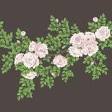 Αναδρομικό άνευ ραφής πρότυπο με τα τριαντάφυλλα Στοκ φωτογραφία με δικαίωμα ελεύθερης χρήσης