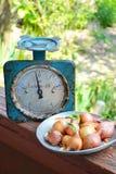 Αναδρομικό βάρος και ένα πιάτο του κρεμμυδιού Στοκ Φωτογραφίες