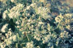 Αναδρομικό υπόβαθρο λουλουδιών Στοκ φωτογραφίες με δικαίωμα ελεύθερης χρήσης