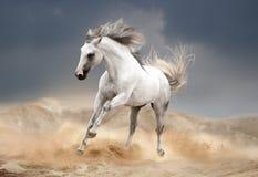 Ανδαλουσιακό άλογο που τρέχει στην έρημο Στοκ Εικόνες