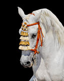 ανδαλουσιακό γκρίζο άλογο ισπανικά διακοσμήσεων Στοκ φωτογραφία με δικαίωμα ελεύθερης χρήσης