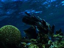 Ανεμιστήρας θάλασσας και κοράλλι εγκεφάλου στοκ φωτογραφίες με δικαίωμα ελεύθερης χρήσης