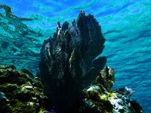 Ανεμιστήρας θάλασσας στοκ εικόνες