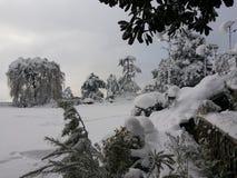 Ανεμιστήρες χιονιού Στοκ Εικόνα