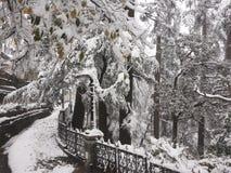 Ανεμιστήρες χιονιού Στοκ Εικόνες