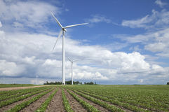 Ανεμοστρόβιλοι στον τομέα σόγιας την ηλιόλουστη ημέρα με τα σύννεφα και το μπλε Στοκ εικόνες με δικαίωμα ελεύθερης χρήσης