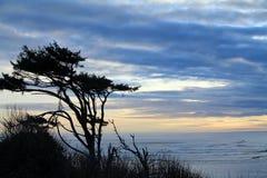 Ανεμοδαρμένα δέντρα που σκιαγραφούνται ενάντια σε ένα νεφελώδες ηλιοβασίλεμα στην παραλία Στοκ Εικόνες