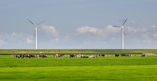 Ανεμόμυλοι και αγελάδες Στοκ Φωτογραφία