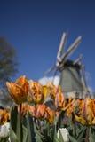 Ανεμόμυλος και τουλίπες, Κάτω Χώρες Στοκ φωτογραφία με δικαίωμα ελεύθερης χρήσης