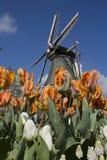 Ανεμόμυλος και τουλίπες, Κάτω Χώρες Στοκ φωτογραφίες με δικαίωμα ελεύθερης χρήσης