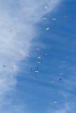ανεμόπτερο Στοκ Εικόνα
