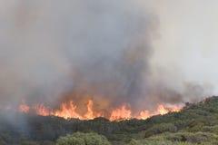 ανεξέλεγκτη δασική φωτιά &p στοκ εικόνα
