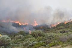 ανεξέλεγκτη δασική φωτιά &p στοκ εικόνα με δικαίωμα ελεύθερης χρήσης