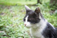 ανεπαρκές περιπλανώμενο κεφάλι γατακιών Στοκ Εικόνες
