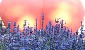 ανθίζει λίγα πορφυρά Στοκ φωτογραφία με δικαίωμα ελεύθερης χρήσης