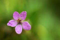Ανθίζοντας άγριο λουλούδι στοκ φωτογραφίες