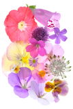 Ανθίζοντας άνθη Στοκ Εικόνα
