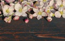ανθίζοντας άνοιξη λουλουδιών κερασιών κλάδων ανασκόπησης Στοκ Φωτογραφίες