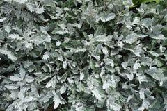 Ανθίζοντας ανθίζοντας άσπρο υπόβαθρο λουλουδιών Στοκ εικόνες με δικαίωμα ελεύθερης χρήσης