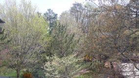 ανθίζοντας δέντρα άνοιξης γραμμών Στοκ εικόνες με δικαίωμα ελεύθερης χρήσης