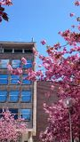 ανθίζοντας δέντρα άνοιξης γραμμών Στοκ Εικόνες