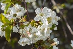 Ανθίζοντας δέντρα άνοιξη Στοκ εικόνα με δικαίωμα ελεύθερης χρήσης