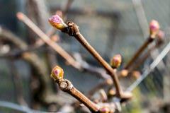 Ανθίζοντας δέντρα άνοιξη Στοκ Εικόνες
