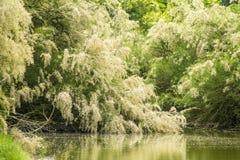 Ανθίζοντας δέντρα άνοιξη Στοκ Φωτογραφία