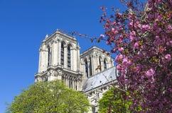 Ανθίζοντας δέντρα στο υπόβαθρο του καθεδρικού ναού της Notre Dame Στοκ φωτογραφία με δικαίωμα ελεύθερης χρήσης